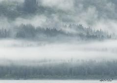 Rainy, Misty, Cold and Happy (Alfred J. Lockwood Photography) Tags: alfredjlockwood landscape forest cloud rain mist fog morning water harbor ocean valdez alaska summer borealforest