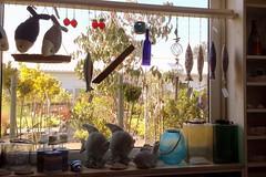 20160911_112245 (LucyPl) Tags: kapias okno marynistyczne ryby