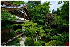 Hosen-in temple's front garden, Kyoto (Damien Douxchamps) Tags: japan  japon kansai  kinki  kyoto  ohara oohara  hosenin  temple     aomomiji  greenmaple springfoliage japanesegarden