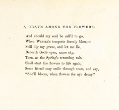 Wild Flowers folio - A Grave Among The Flowers poem pg 2 of 2 (Madison Historical Society (CT-USA)) Tags: madisonhistoricalsociety madisonhistory mhs madison connecticut ct conn connecticutscenes country usa newengland nikond600 nikon d600 bobgundersen bostonpostroad route1 allisbushnellhouse abhouse antiques museum old historical history art poetry cmbadger book document painting flower interesting image inside indoor interior picture photo shoreline scene scenes text writing flickr clarissamungerbadger mrscmbadger clarissamunger clarissabadger botanical botanicalartist prose folio botanicalillustrator womanartist flowerpaintings graceful stylized watercolor delicacy lithographicplates illustrated illustrator design