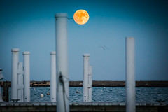 Super Moon tonight over Lake Michigan (**** j a z z z i ***) Tags: 14 bigger 30 brighter dont miss 2016 supermoon it wont be this big again until 2034 canon eos 5d mark iv ef28300mm f3556l is usm super moon tonight over lake michigan