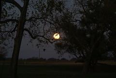 DSC00442 (carrie_20001jf) Tags: supermoon moon morning night astronomy texas sky texassky supermoon2016 2016 skyporn nature texasnature