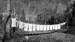 017crpshsatbwacon (citatus) Tags: laundry clothes line wards island toronto islands canada fall afternoon 2016 pentax k3 ii bw