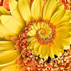 Flowers Unwinding (ClaraDon) Tags: photoshop pixelbender droste