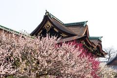 -   Kitani Tenman-gu Shrine (Active-U) Tags:   kyoto japan