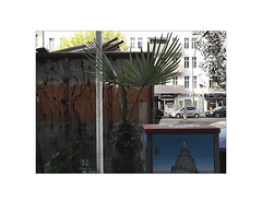 2016-04-13_152858684_0F765_iOS (typograph030) Tags: palms berlin deutschland de palmen palmtrees
