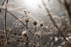 Dreamy wetlands scene; thistles going to seed (drbensonjr) Tags: nature bakerwetlands