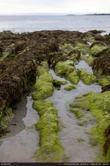 Algues #1 (Ludtz) Tags: ocean sea mer beach rock canon sand brittany rocks sable bretagne atlantic breizh plage rocher rochers algues atlantique 5dmkii canoneos5dmkii ludtz