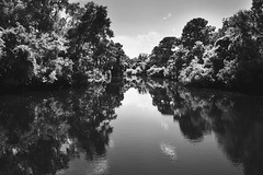 Lowcountry (KrisVlad) Tags: white black blur nature photoshop sharp filter reflectoin lowcountry gradual