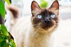 IMG_M5624 (Max Hendel) Tags: cat photography gato felino streetcat felie bichano animaldeestimação beautifulcat animaldoméstico canoneosdigital photobymaxhendel bymaxhendel photographedformaxhendel fotografadopormaxhendel maxhendel photographedbymaxhendel pormaxhendel canoneosphoto photographermaxhendel maxhendelphotography