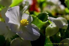 10092015_Flowers_09