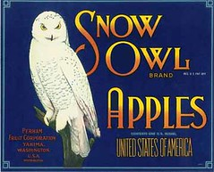 "Snow Owl • <a style=""font-size:0.8em;"" href=""http://www.flickr.com/photos/136320455@N08/21283906848/"" target=""_blank"">View on Flickr</a>"