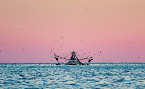 Shrimp Boat & Gulls