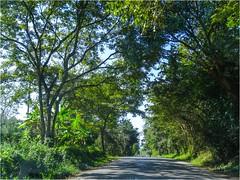 Tamazunchale - SLP México 150221 100416 02557 HX50V (Lucy Nieto) Tags: méxico árboles mx sanluispotosí tamazunchale huastecapotosina