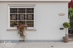 20151003_WWPW15_OverleieKortrijk-055 (Astrid Callens) Tags: urban nature water boat kortrijk leie plataan overleie worldwidephotowalk kolibreeze astridcallens