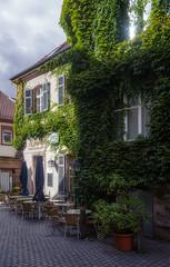Le Marecage (JN) Tags: city summer green germany deutschland town nikon ivy 1735mmf28d rheinland pfalz landstuhl d700