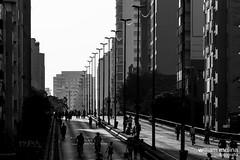 Parque Minhoco (William Molina Fotografia) Tags: city cidade urban building arquitetura architecture sopaulo centro sp urbano prdios urbanlandscape edifcio paisagemurbana paulicia architecturephotography fotografiadearquitetura skypercity