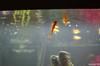 Aquarium-7 (sleepr56) Tags: pet fish bus water vw lost aquarium neon vampire fresh sword phish tetra freshwater neontetra platti platty fishofflickr vampiresword