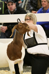 RAWF15 JSteadman 0102 (RoyalPhotographyTeam) Tags: sun royal goat 2015 rawf nov08