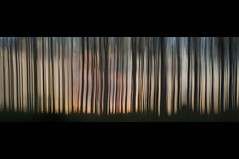 Poplars at Sunset (Broadward)
