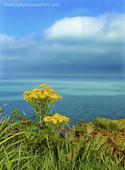 Valley of Rocks (justyourcofchi) Tags: blue sea england sun seascape green landscape coast september devon exmoor valleyofrocks chiarnold justyourcupofchi