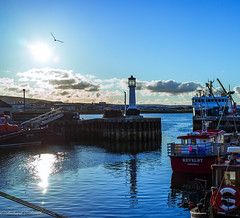 harbour silhouette (Rourkeor) Tags: sparkle reflections sunshine sun kirkwall scotland unitedkingdom gb island lighthouse silhouette seagull flight blue clouds boats harbour ships sony sonyrx1r rx1r fullframe carlzeiss zeiss sonnar t 35mm lightroom