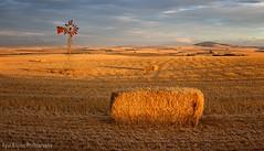 Durbanville Summmer Farm Scene (Panorama Paul) Tags: sunset panorama southafrica durbanville haybales westerncape windpump nikkorlenses nikfilters nikond800 wwwpaulbruinscoza paulbruinsphotography