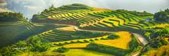 Untitled_Panorama Sapa 0911 (HUONGBEO PHOTO) Tags: landscape outdoor terraces ricefields sapa laocai havest ef70200mmf28lusm locai magt rungla rungbcthang ngyma vngcao canoneos5dmark2 havestingseason