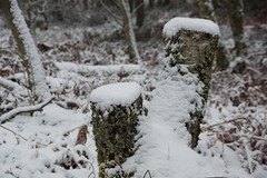 I'm Stumped (steve_whitmarsh) Tags: trees snow ice water scotland aberdeenshire cairngorms