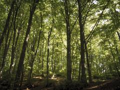 Magic forest (Massimo Saviotti) Tags: wood trees plants mountain plant mountains tree alberi forest montagne woods flickr hill hills monte albero piante mons montagna colline collina cima bosco pianta foresta massiccio