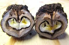 Heart To Heart (marcus gordianus) Tags: walnuts shells harvest closeup nature blackwalnuts nuts nut walnuss schwartzewalnuss nsse
