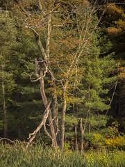 P9210019 - Intricacies (Syed HJ) Tags: olympusem5 olympus em5 fujian50mmf14 fujian50mm fujian 50mm cctvlens cctv trees tree treetrunk