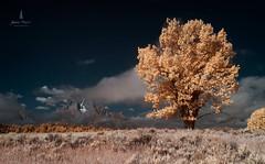 teton_infrared_2016_1web (Jessica Haydahl Photography) Tags: grand teton national park wyoming tetons mormon row john molton barn apsens fall colors infrared photography nikon d810 d7000 pentax 645z medium formate landscape ansel adams