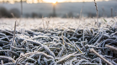 Frost (Kubo_J) Tags: frost freeze grass cold winter throwback sony slovakia nature explore