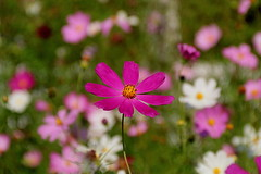 (zool18) Tags: flower foto flickr flora life canon color summer sweet garden green good beauty botanic bokeh outdoor picture pink plants macro mark2 amazing home awesome ukraine