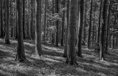 forest, austria