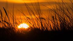 Remember Last Summer (MiBro) Tags: zingst mecklenburgvorpommern deutschland somm summ sunset sonnenuntergang sonne sonnenlicht sommerfeeling strand strandgrass tele sunlight