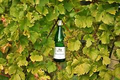 thats how wine grows (heuwieser) Tags: weinberg baden auggen nikon d7200 reben