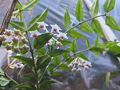 have no idea (Rodrigo Ribeiro) Tags: nature natureza flor flower garden gardening jardim jardinagem