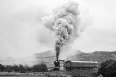 Steam train 8572 on the North Norfolk Railway (Steve Moore-Vale) Tags: steam train locomotive lineside fotobuzz workshop north norfolk railway sheringham weybourne golf club countryside vintage stevemoorevale loco