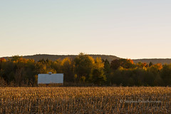 Late Afternoon on a Charlton Farm (UpstateNYPhototaker) Tags: building buildingsplaces charltonny gold green landscape ny newyorkstate nikon70200mmf28 nikond610 nikond7000 red rural saratogacounty unitedstates upstateny yellow barn places structure