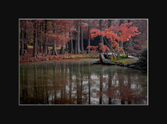 Maymont II (The LightCatcher) Tags: color landacape intimatelandscapes water reflections fall leaves colors canon50d canonefs1585mm