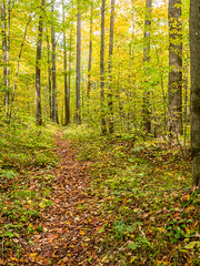 The soft parade (Wicked Dark Photography) Tags: landscape wisconsin autumn fall forest nature path trail woods