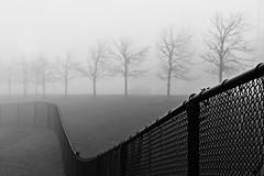 November Fog 2 (Doris Burfind) Tags: fog november tree blackandwhitepeople dog mist outdoor georgetown haltonhills