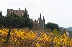 Chateau de Serres (Niall Corbet) Tags: france languedoc roussillon occitanie chateaudeserres serres vine vineyard vignoble autumn chateau aude