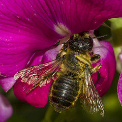 "Beezelbutt.....HBBBT!! • <a style=""font-size:0.8em;"" href=""http://www.flickr.com/photos/105673978@N08/30771280372/"" target=""_blank"">View on Flickr</a>"