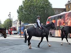 Metropolitan Police Service - Mounted (Waterford_Man) Tags: metropolitanpoliceservice mounted london