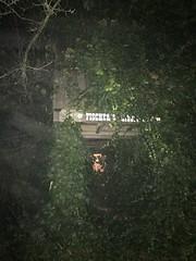 Foggy Tree Fort -Explored- (Tina Stadeli) Tags: fog treefort ivy kids treehouse tree treeivy cold grandkids greatgrandkids tinastadeli explore