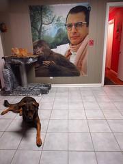 Giles, Jimmy and Jeff Goldblum (Mandy_moon) Tags: 2016 jeffgoldblum giles jimmy