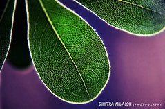 get closer... (dimitra_milaiou) Tags: nature green macro close up closeup art life live love plant purple poetry nikon d90 d 90 milaiou dimitra greece greek andros leave leaves leaf line curves pure color colour nice shot photo photography      white  light shadow world planet earth bokeh dslr pattern moon moonlight rivers flower  ngc